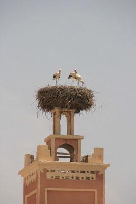 Storchennest auf Mosche Dadesschlucht