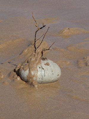 Bonsaibaum auf Meereskiesel, Terre de ocean