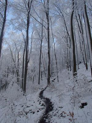 erster Schnee im Ith