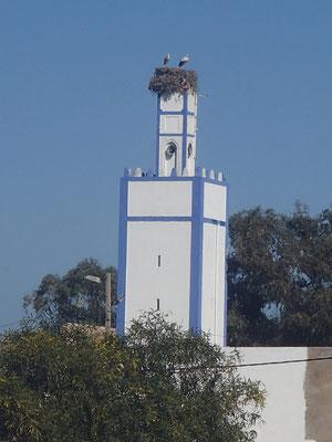 Störche auf Mosche