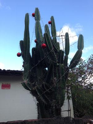 Weihnachtsbaum mal anders... :-)
