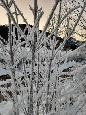 alles gefroren - wie im Wintermärchen