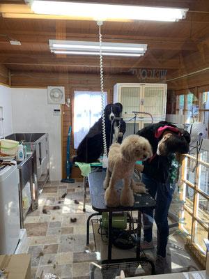 dog salon tete ドッグサロンテテ 店内が広くわんちゃん小物も充実!