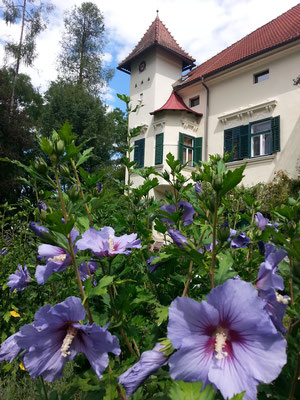 Schlosspark und Schloss Ebenau, Sommer ©Galerie Walker