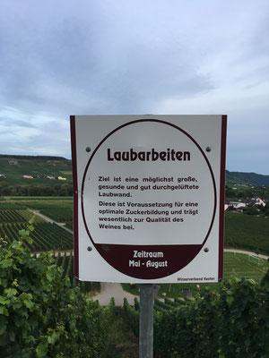 Auf dem Wein-Lehrpfad