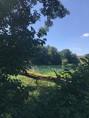 Naturschutzgebiet Flachsee, Unterlunkhofen, Kanton Aargau