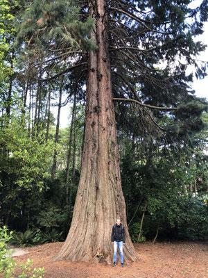 Grote boom in Kiwi Birdlife Park