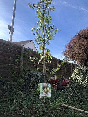 Wir tun was für den Klimawandel und haben einen Baum gepflanzt....