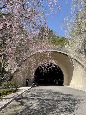 トンネルをくぐり