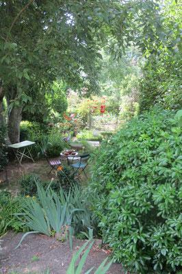 jardin ombragé par le Micocoulier de 120 ans