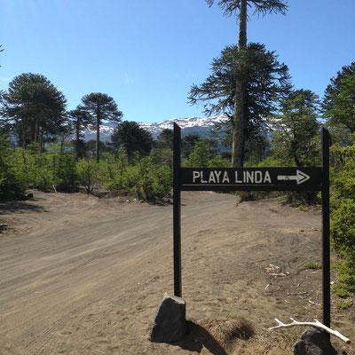 Parque Nacional Conguillió (Chile): Playa Linda