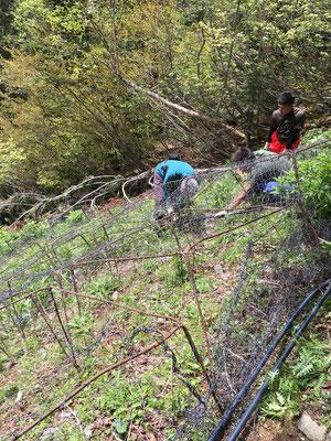 鹿柵の網をかけます
