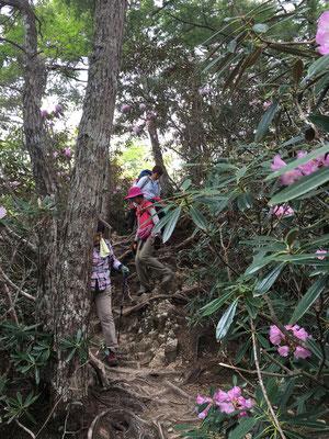 石楠花の咲く登山道