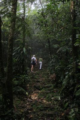 dans la jungle au panama
