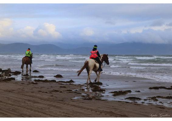 Irlande chevaux mer