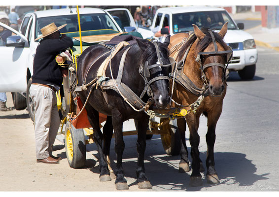 Chili Pichilemu chevaux