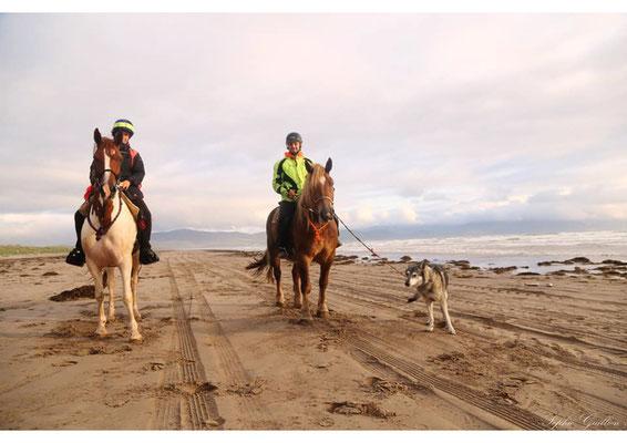 Irlande mer chevaux