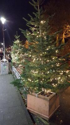 Die Lichterketten an de Weihnachtsbäumen