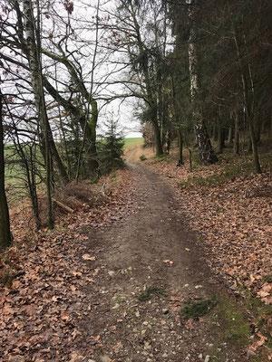 Waldweg im Kleinolberdorfer Umland