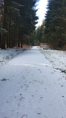 Waldweg in Richtung Sternmühle