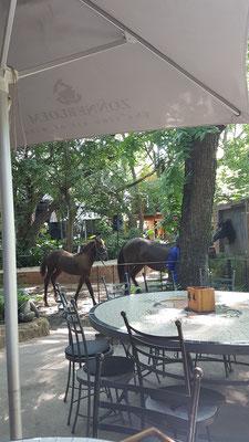 """Es gibt sie wirklich die black horses im """"Black Horse"""""""