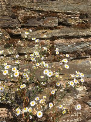 alte Mauer in den Weinbergen
