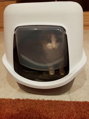 Monia untersucht ihre neue Katzentoilette.