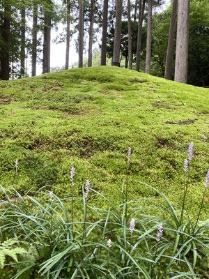 苔の丘とお花