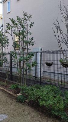 移植した庭の樹木