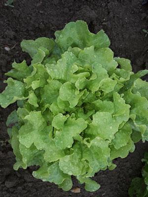 Salat...