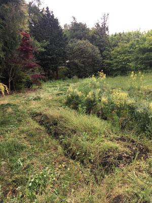草刈り後なんとか畝がわかるように。