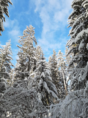 Winter Paradise Lenzerheide