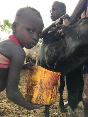 в племени Мурси пьют кровь из артерии коровы