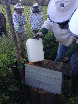 Mise de sirop pour attirer les abeilles dans la ruchette