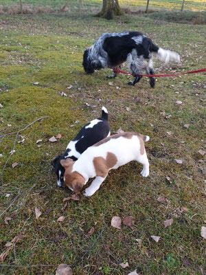 Brix und Bandit bekommen regelmäßig Hundebesuch, damit fremde Hunde bei Abgabe schon selbstverständlich sind