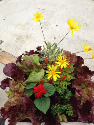 庭育 食べれる寄せ植え