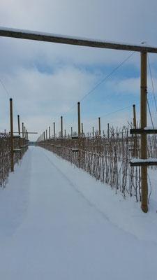 Himbeeranlage Winter 2014