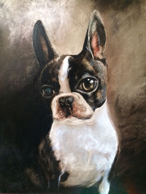 Portrait Bostonterrier / Kunde: privat