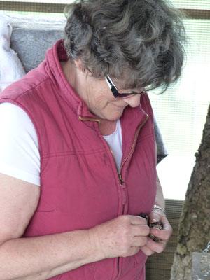 31.05.2016: Fütterung der Buntspechte durch Frau Riehl - Foto: Stefan Wagner
