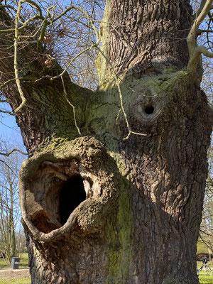 Bild: Baum regt zur Phantasie an