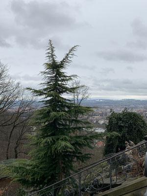 Panoramablick auf das Dresdner Elbtal