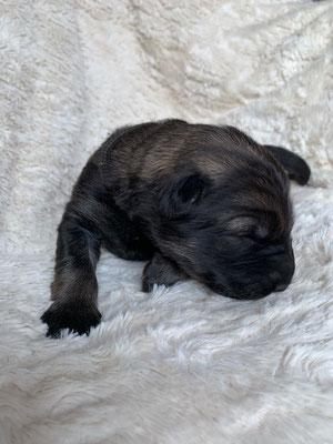 Petite noire