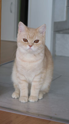 Fiodora
