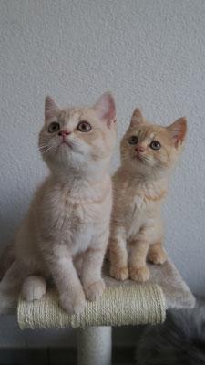 Fiodora und Freya