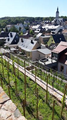 Die Anlage des Weinberges und der Stützmauern ist bereits gut zu erkennen