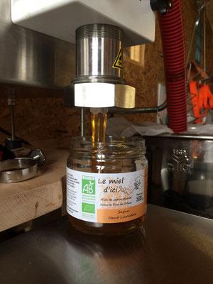 Le miel de sapin 2020 : une étonnante douceur !