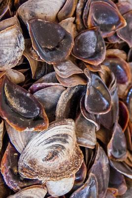L'ongle odorant ou onyx est une poudre provenant d'un coquillage pêché dans la Mer Rouge. il s'agirait de l'opercule du coquillage d'un mollusque, le strombe. Cet opercule ressemble à un ongle ; un parfum s'en exhale par la combustion.