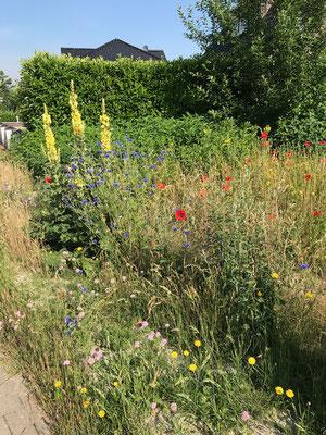 Heinrich Hachmann fotografierte diesen blühenden Vorgarten.