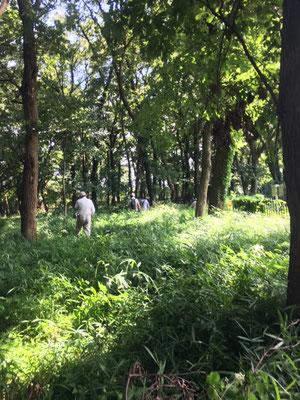 済美山自然林 たっぷり下草がはびこっていて歩くのも大変