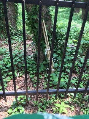 マーキング用の竹